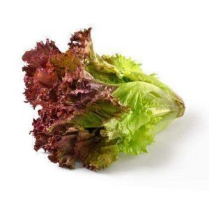 Lettuce Colour